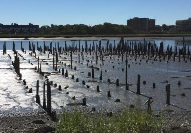 Senator Joseph Finnegan Park Remediation and Restoration | GEI