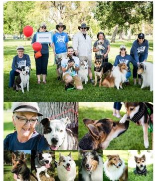 collage of people with SPCA dogs